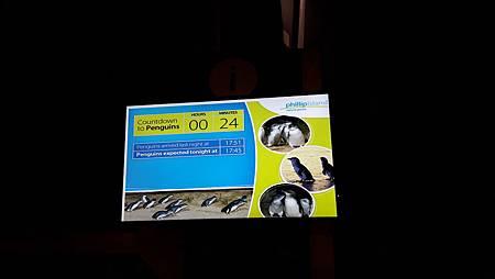 3.6-20160728-菲利浦島生態保護區 -企鵝 (1).jpg