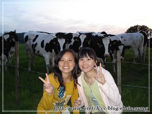 2008.05.09阿亨.看牛吃草2.jpg