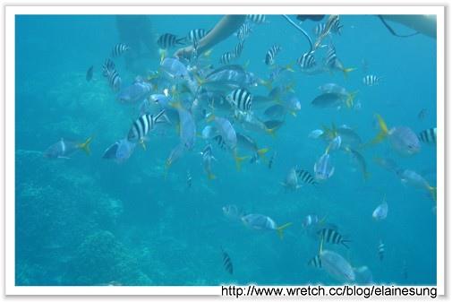 DSC03497硬珊瑚區.jpg