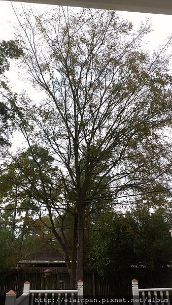 2012-11-23 08.39.08.jpg