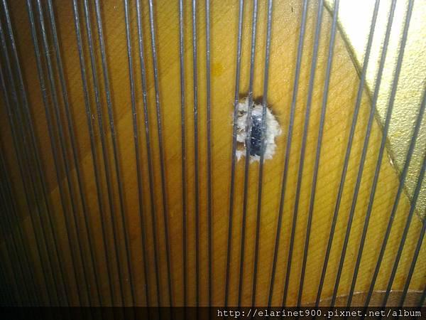 鋼琴變成蟑螂窩的開始3