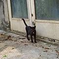 10/24 一塊兒的另一隻小貓