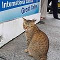 10/26 依照慣例 路邊有貓就要玩