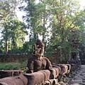 11/25 往Preah Khan 寶劍塔的路上  樹超高