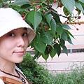 5/29 哲學之道  櫻桃樹呢