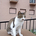day 3 長崎 - 熊本 020 長崎的貓貓.JPG