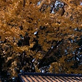 day4 熊本-湯布院-15 秋 by W.JPG