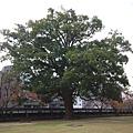 day4 熊本-湯布院 05 巨樹 by W.JPG