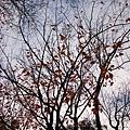 day4 熊本-湯布院- 06 樹影 by W.JPG