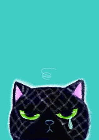 bluecat正