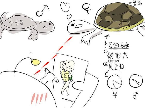 烏龜.jpg