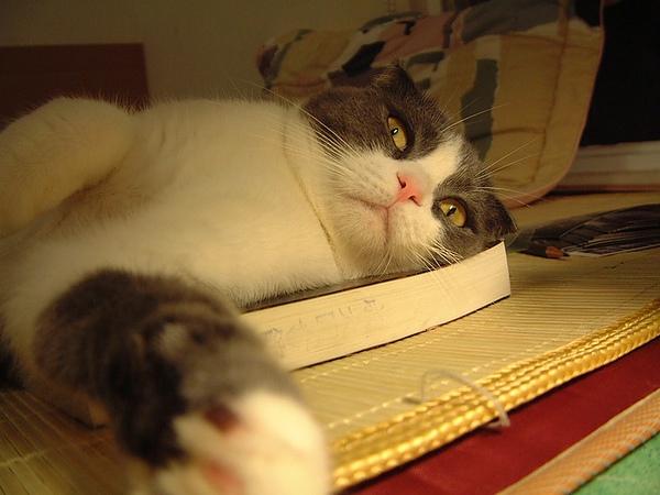 躺在書上的beta