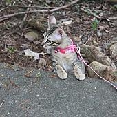 201008溜貓-2