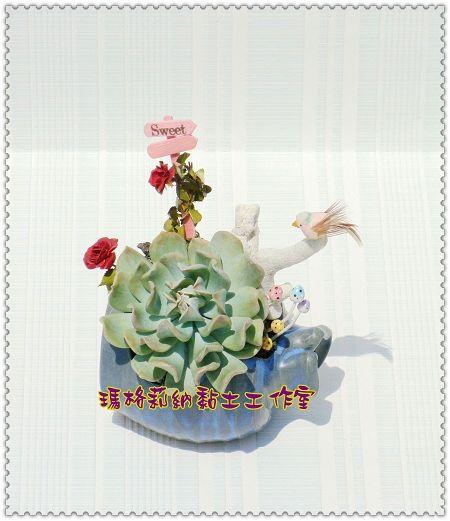 特葉玉蝶 (2)