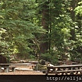 armstrong-picnic