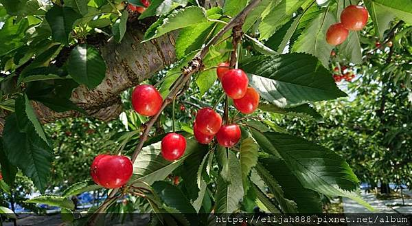 messageImage_1560789788567
