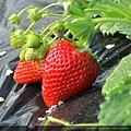 skyberry01.jpg