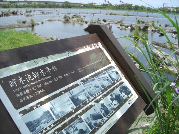 水蜻蜓_028.JPG