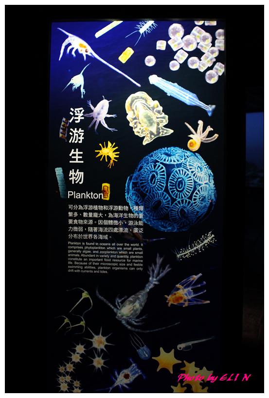 1010921-國立海洋生物博物館+潮州牛肉福-16