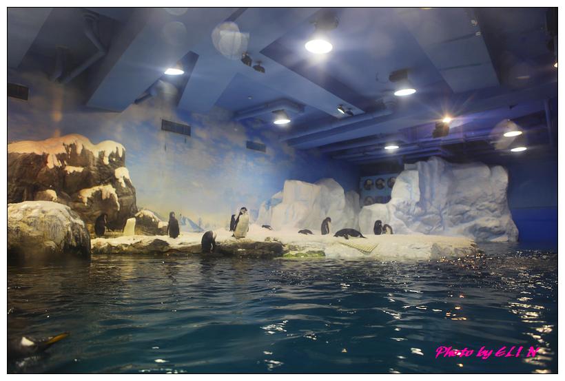 1010921-國立海洋生物博物館+潮州牛肉福-19