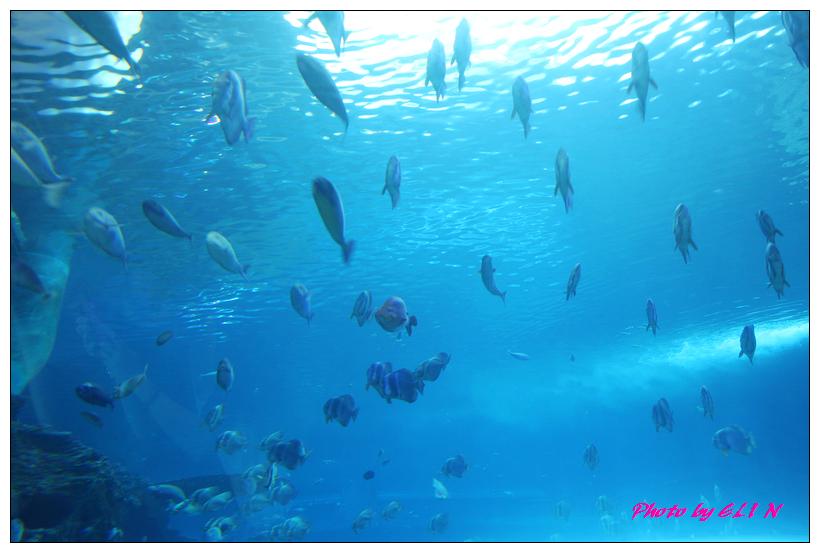 1010921-國立海洋生物博物館+潮州牛肉福-34