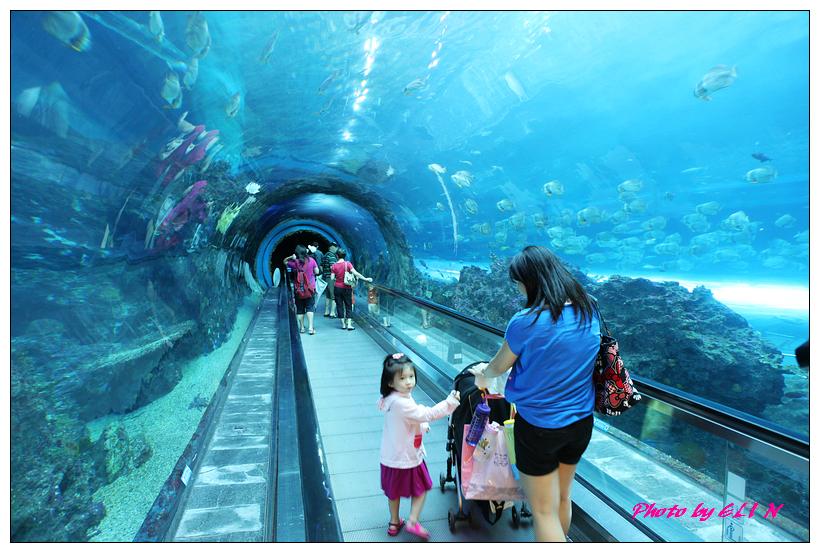 1010921-國立海洋生物博物館+潮州牛肉福-35