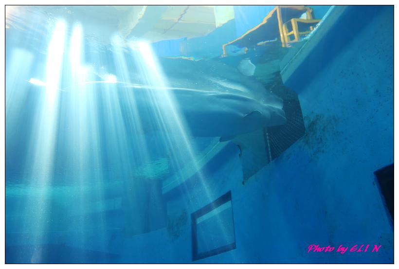 1010921-國立海洋生物博物館+潮州牛肉福-36