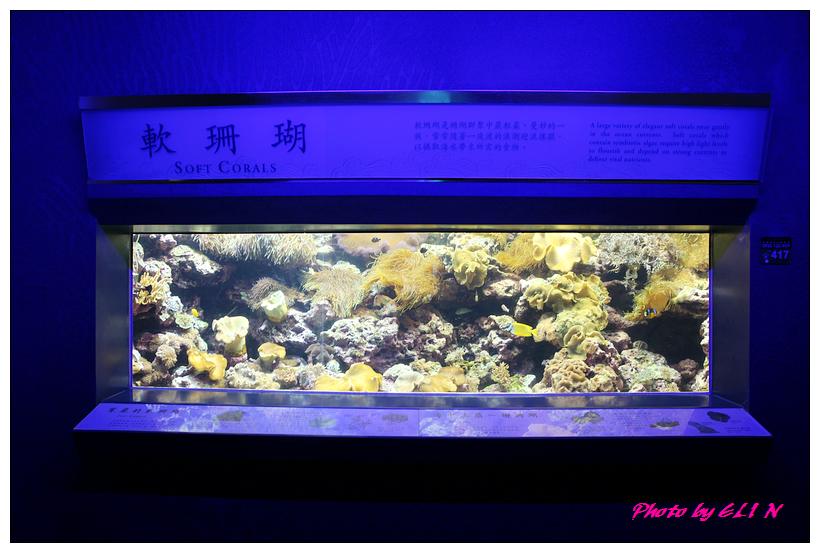 1010921-國立海洋生物博物館+潮州牛肉福-38