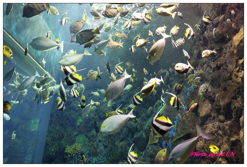 1010921-國立海洋生物博物館+潮州牛肉福-42