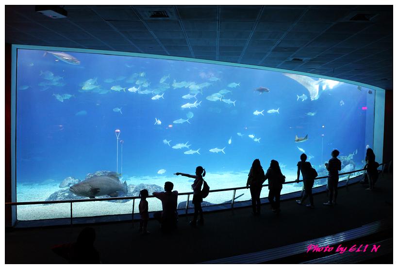 1010921-國立海洋生物博物館+潮州牛肉福-43
