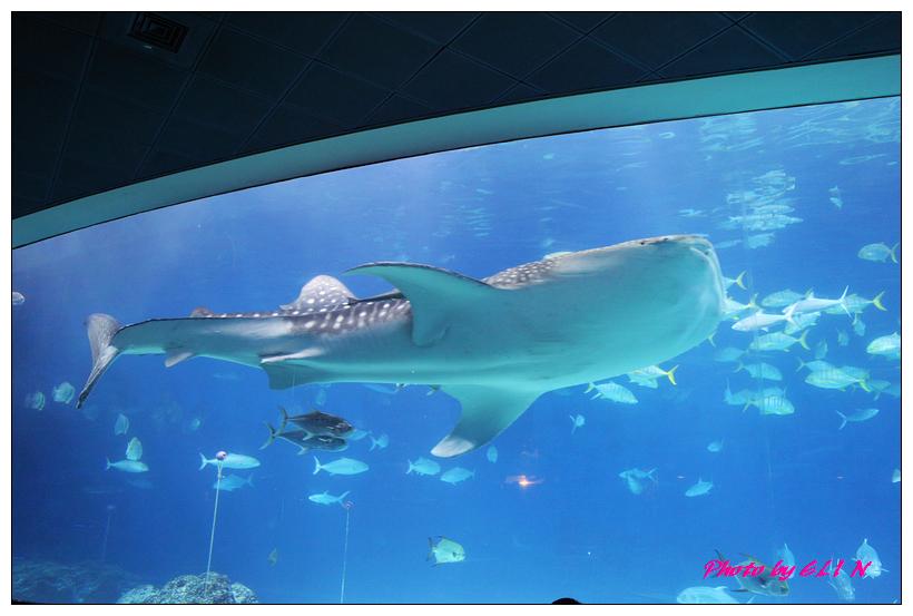 1010921-國立海洋生物博物館+潮州牛肉福-44