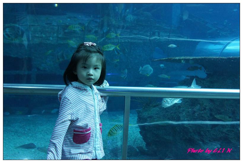 1010921-國立海洋生物博物館+潮州牛肉福-59