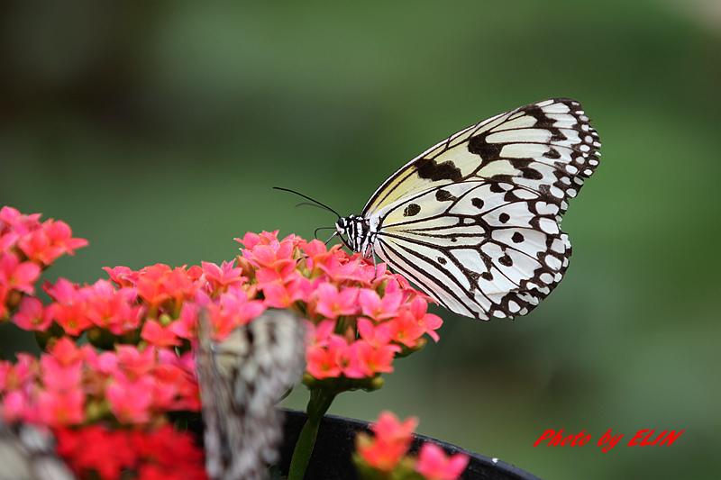 1030308-金獅湖蝴蝶園&屏東來一連莊休閒景觀餐廳-13.jpg