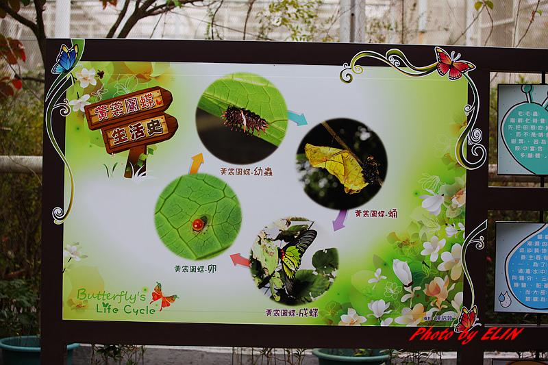 1030308-金獅湖蝴蝶園&屏東來一連莊休閒景觀餐廳-16.jpg