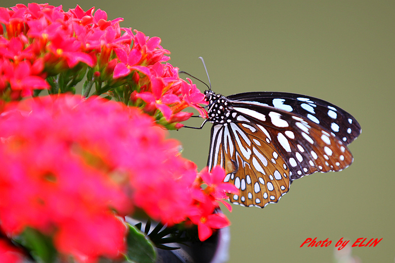 1030308-金獅湖蝴蝶園&屏東來一連莊休閒景觀餐廳-19.jpg