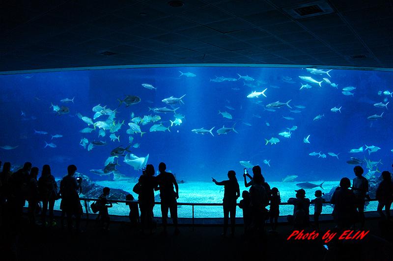 1030822-屏東海洋生物博物館+聚北海道昆布鍋(夢時代店)-21.jpg