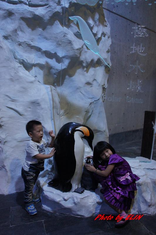 1030822-屏東海洋生物博物館+聚北海道昆布鍋(夢時代店)-33.jpg