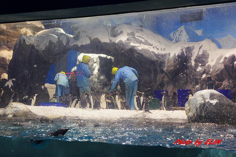 1030822-屏東海洋生物博物館+聚北海道昆布鍋(夢時代店)-34.jpg