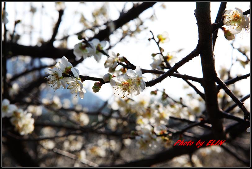 1040110.11-達娜伊谷自然生態公園&日月潭雲品酒店&車程車站-118.jpg