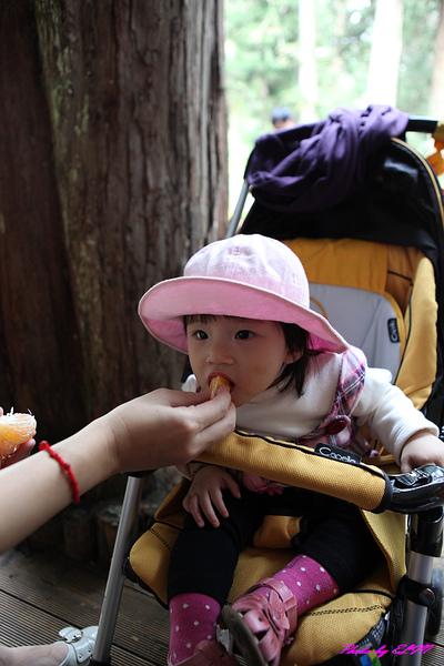 Amber吃橘子.jpg