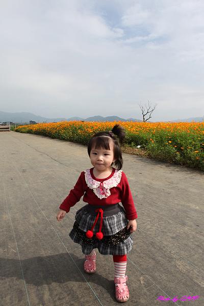 新社花海-8.jpg
