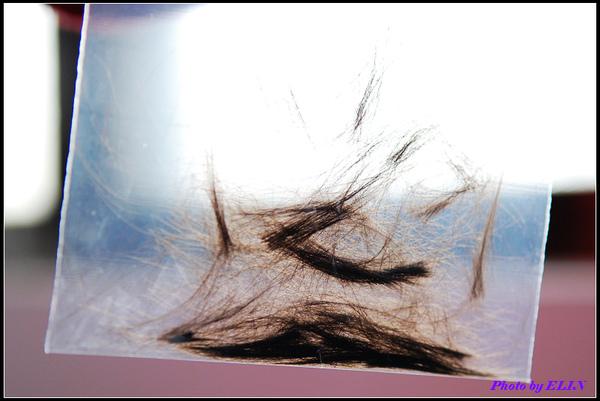 剪下來的頭髮.jpg
