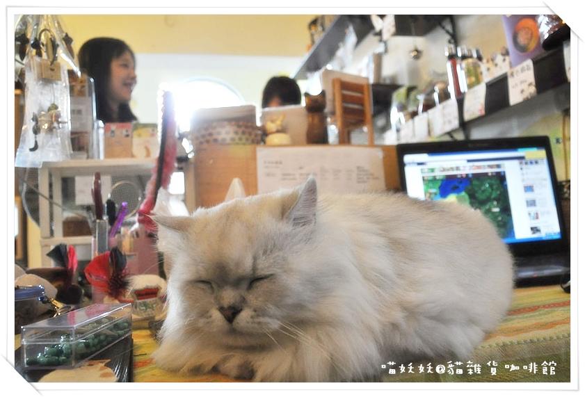 貓雜貨 07