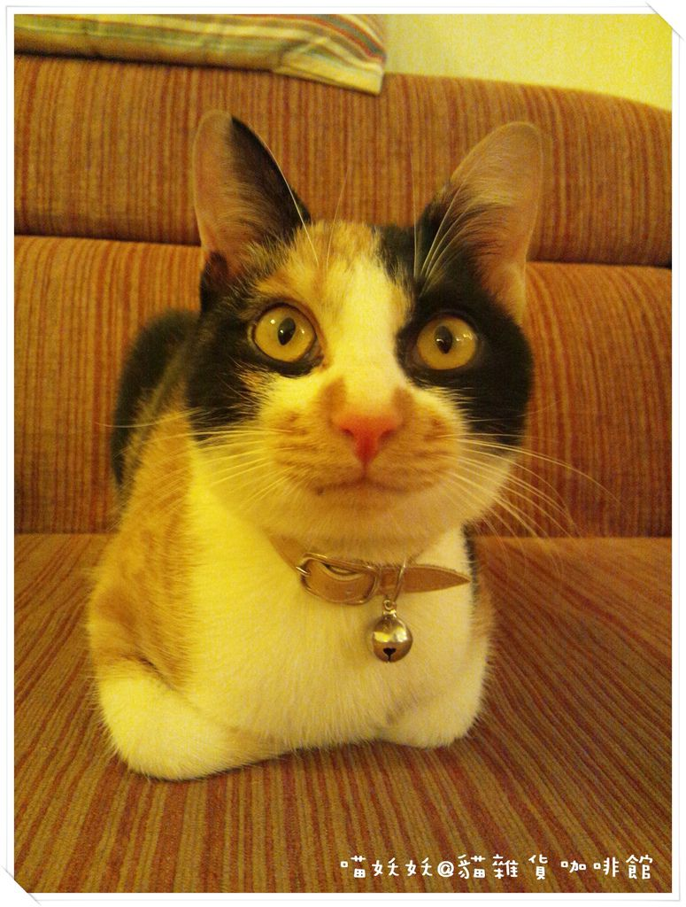 貓雜貨 11
