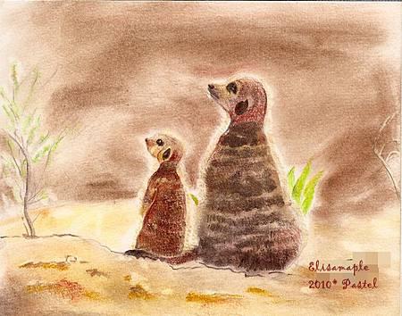 mom&baby03_meerkat