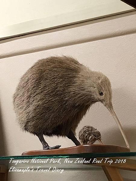 NZ20180101.JPG