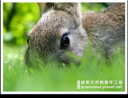 綠果素材故事:動物測試 Animal testing