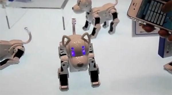 isodog-1339812620
