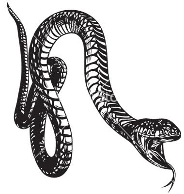 big-snake-vector-1094313