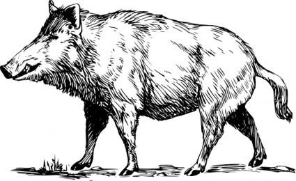 boar_clip_art_7009